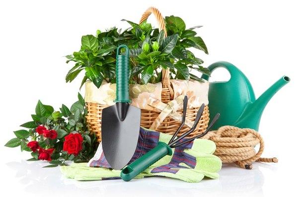 Những dụng cụ cần thiết khi làm vườn