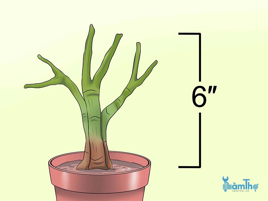 Cắt tất cả các thân cây xuống đến 15cm (6 inch)