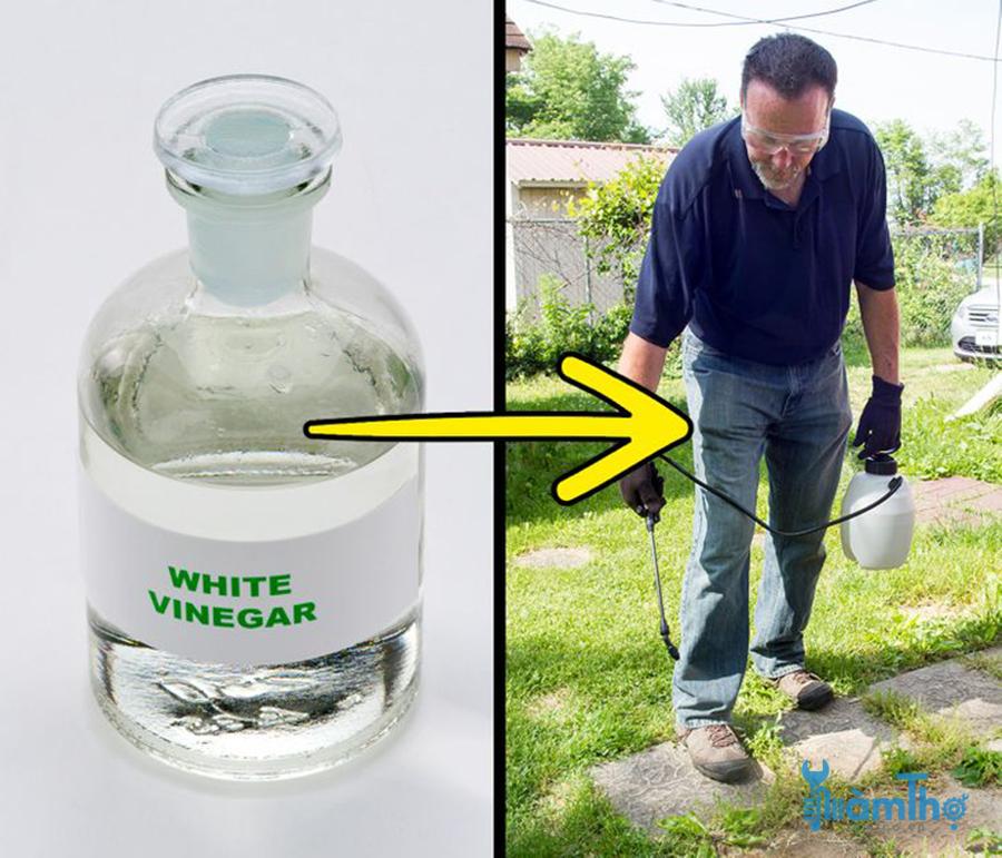 Sử dụng giấm để tiêu diệt cỏ dại trong vườn