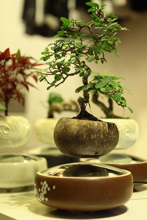 Cách làm bonsai bay