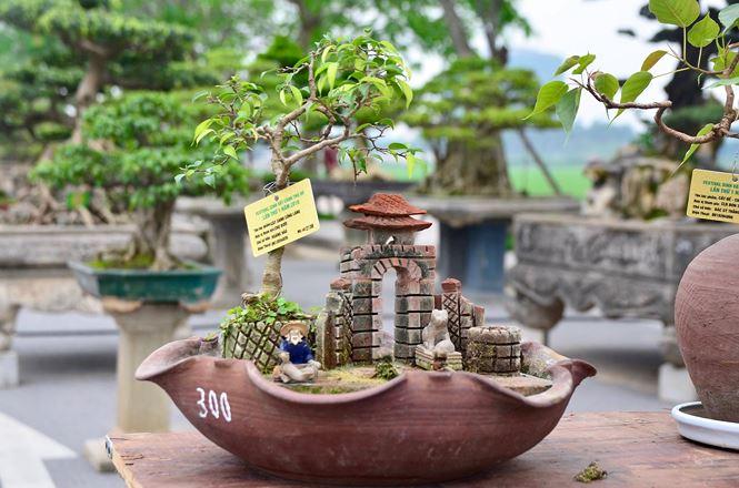 Cách thu nhỏ cây cảnh bonsai
