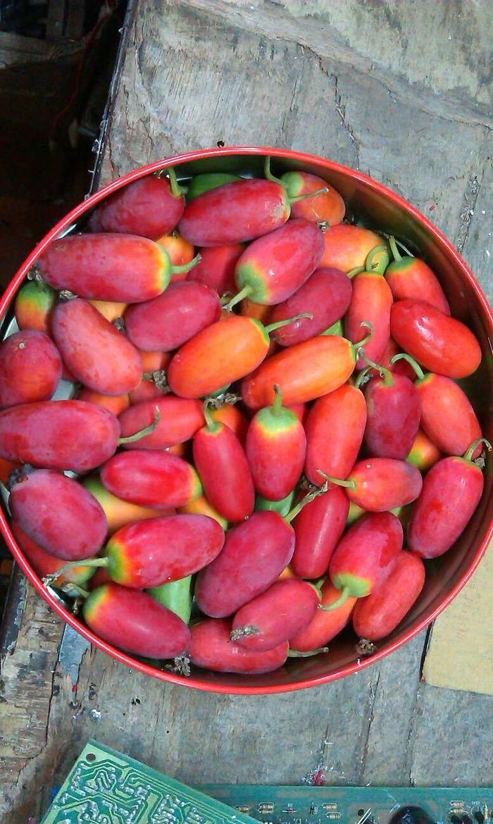 Cách trồng cây bình bát dây cho quả ngon