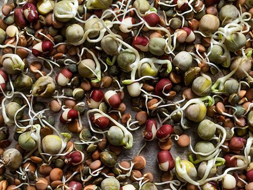 Hướng dẫn cách trồng cây đậu đen