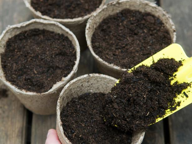 Cách trồng cây cà gai leo giải độc gan