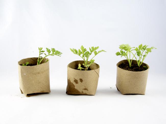 Mẹo làm vườn trồng rau sạch