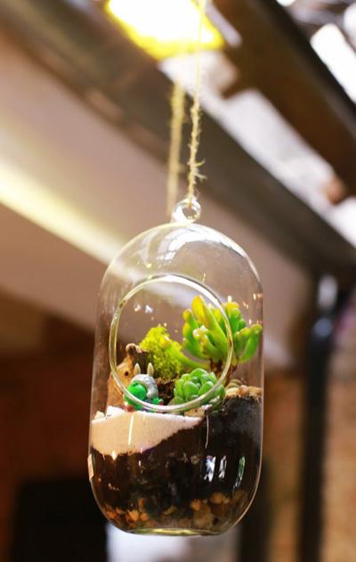 Khám phá thiết kế trồng tiểu cảnh mini trong bình thủy tinh