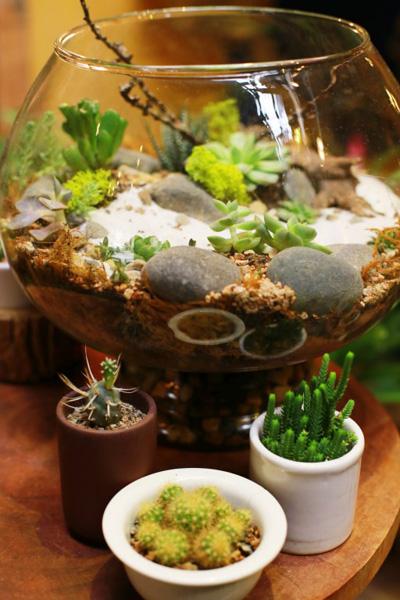 Mẹo trồng cây trong lọ thủy tinh