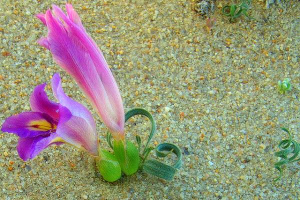 Hướng dẫn cách trồng cỏ xoắn ốc độc lạ