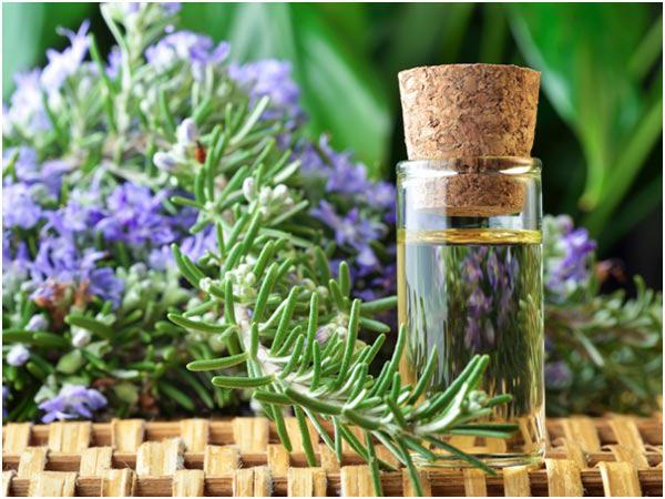 Cách chiết cành cây hương thảo