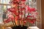 Cách trồng cây phong lá đỏ