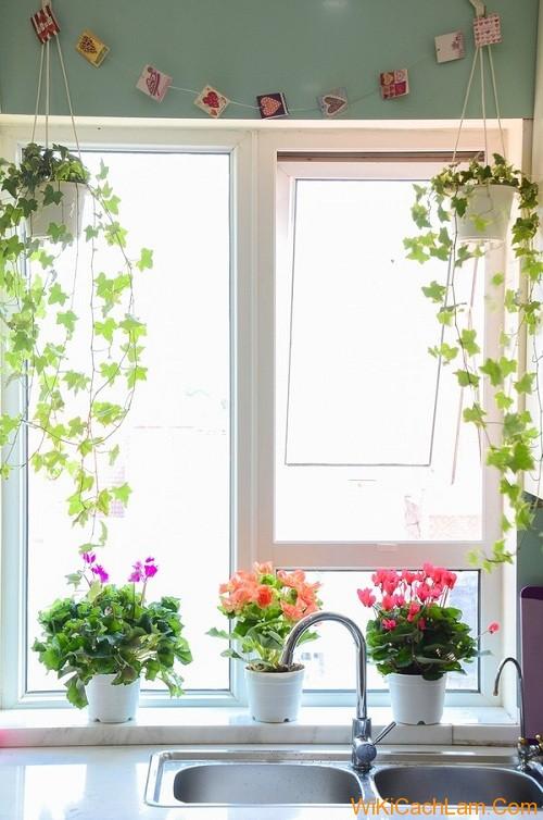 Cách trang trí cửa sổ bằng chậu cây xanh