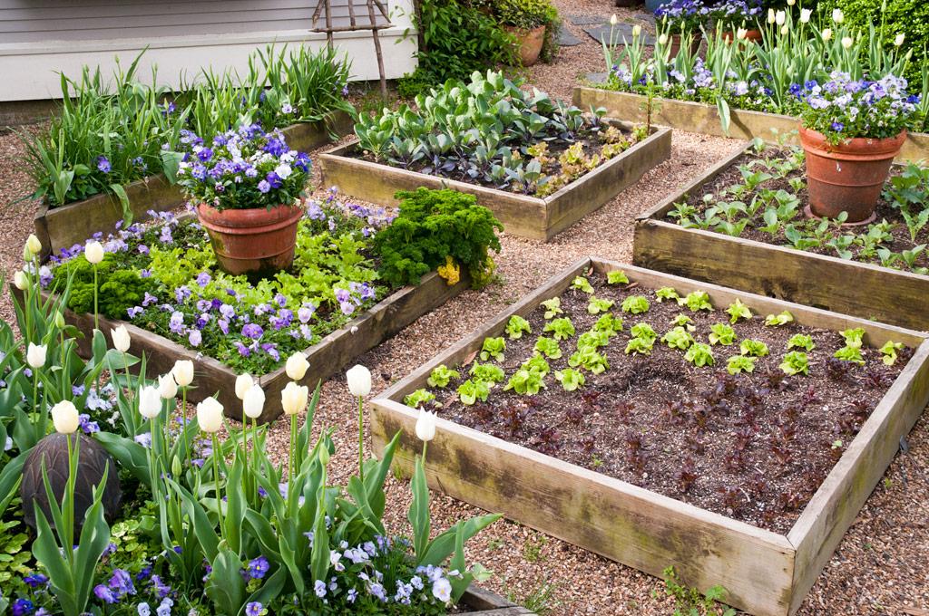 Tuyệt chiêu trồng rau quả đẹp trang trí khu vườn
