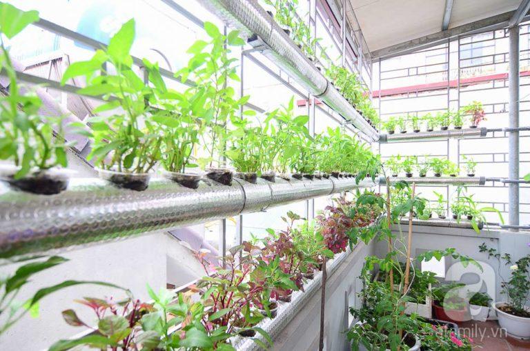 Tuyệt chiêu trồng rau thủy canh tại nhà