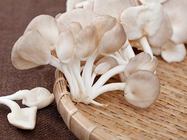 Bí quyết trồng nấm sò ngay tại nhà