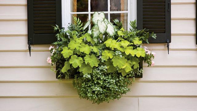 Cách tạo hộp hoa treo trang trí cửa sổ
