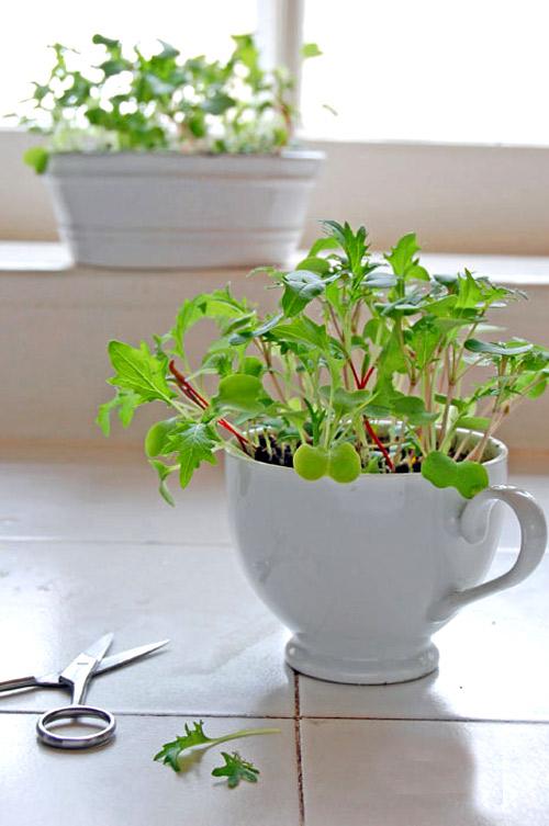 Tuyệt chiêu trồng rau mầm