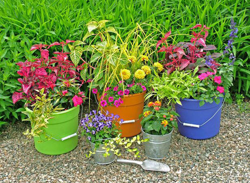 Ý tưởng thay thế chậu trồng cây sáng tạo