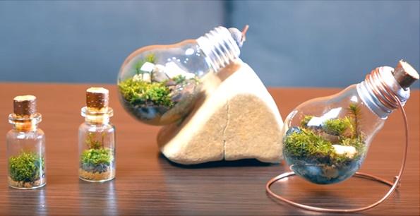 Nghệ thuật trồng cây cảnh mini trong bóng đèn