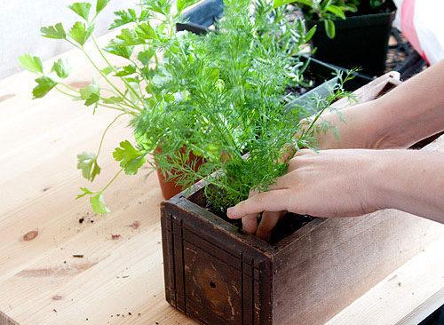Cách giữ ẩm cho đất trồng