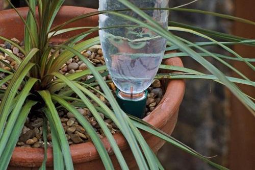Tuyệt chiêu giúp cây cảnh tự tưới nước , giữ ẩm cho cây