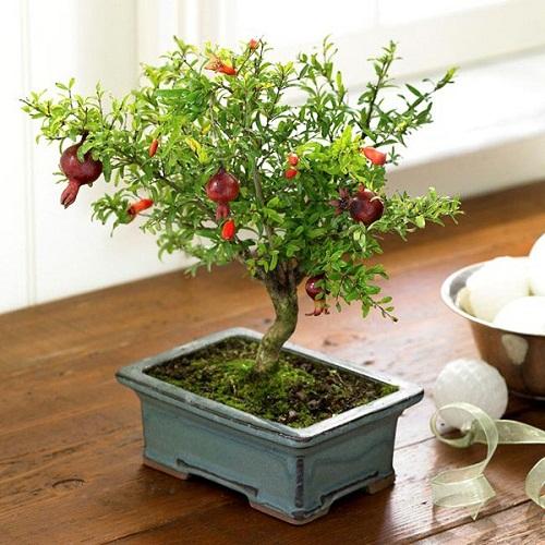 Tuyệt chiêu giúp cây cảnh tự tưới nước , giữ ẩm