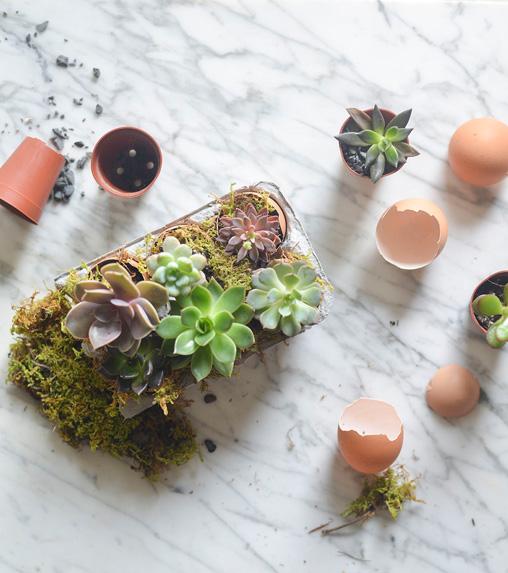Cách trồng cây cảnh trong vỏ trứng