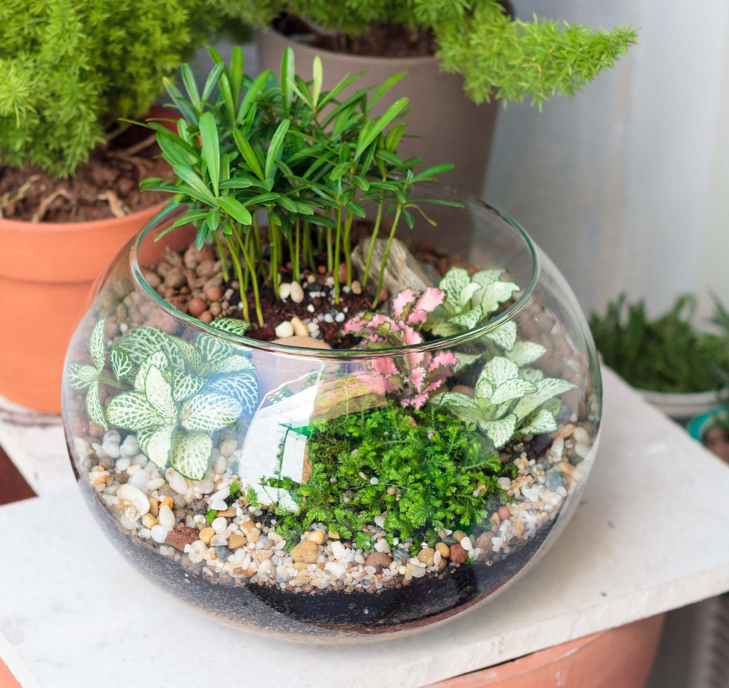 Cách chăm sóc bonsai văn phòng hiệu quả