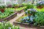 Mẹo làm vườn hữu ích cho người thích trồng rau