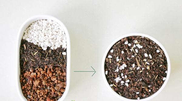 Cách trộn đất trồng sen đá