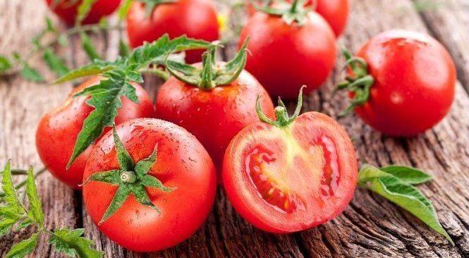 Sai lầm thường mắc phải khi trồng cà chua