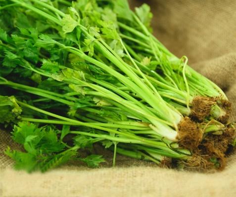 Bí quyết trồng cần tây từ gốc bỏ đi