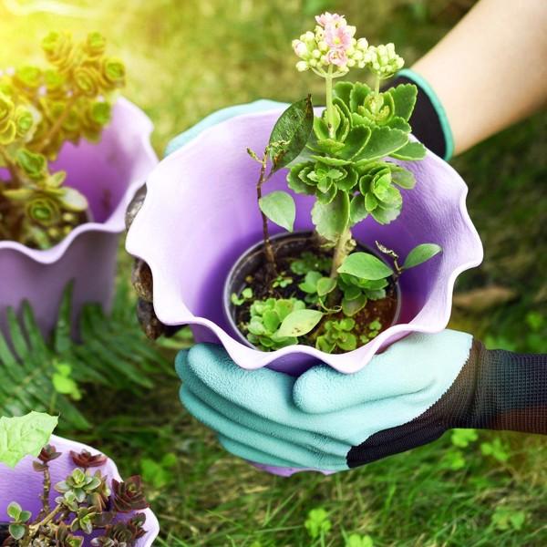 Những lưu ý quan trọng khi bắt đầu trồng rau trong vườn