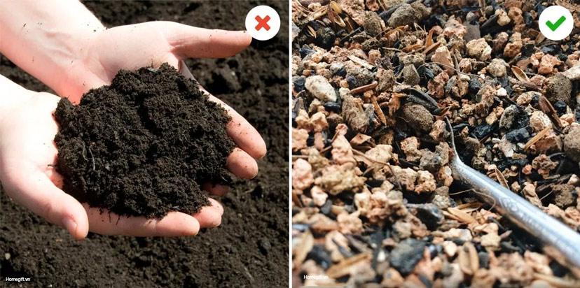 Bật mí sai lầm ai cũng gặp khi trồng sen đá