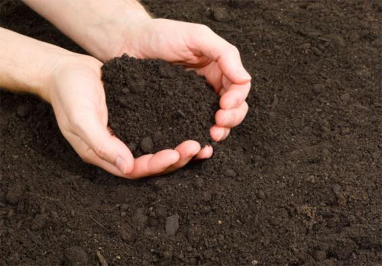 Bí quyết trồng cây cảnh để bàn