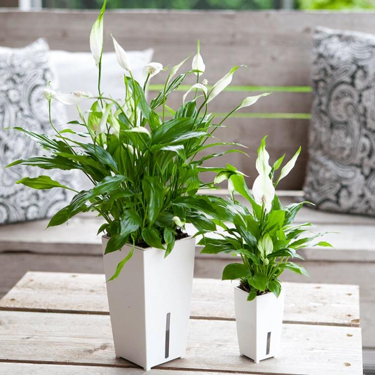 Cách chọn cây trồng trong nhà tốt cho sức khỏe