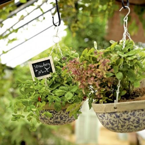 Học cách thiết kế khu vườn mini