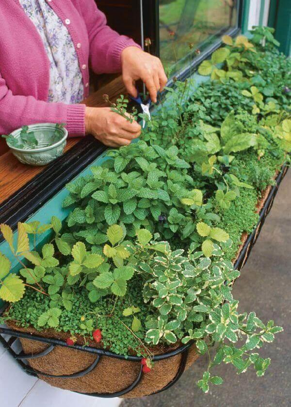 Bí quyết trồng rau sạch giúp nhà chật tiết kiệm diện tích