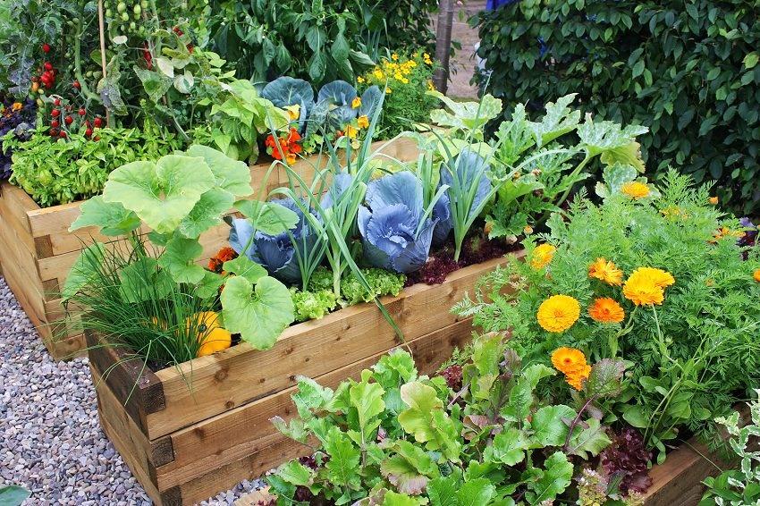 Tuyệt chiêu trộn đất trồng rau sạch