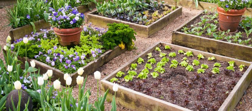 Bí kíp trồng rau bằng khung gỗ