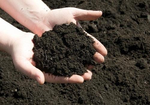 Tuyệt chiêu trồng rau sạch nhanh lớn