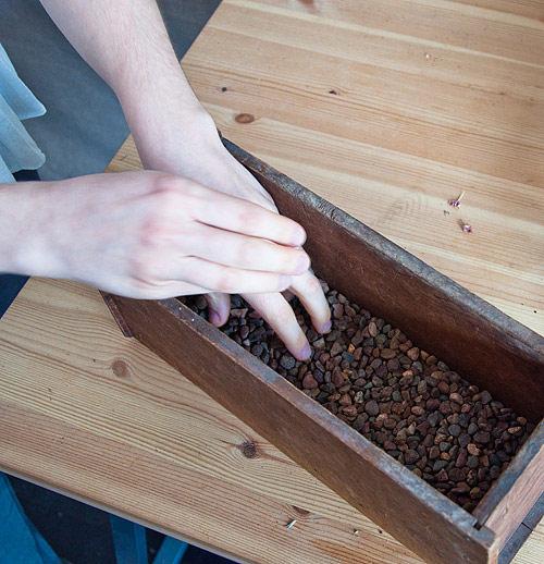 Tuyệt chiêu trồng rau trong bếp bằng chậu cây gỗ độc đáo