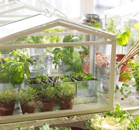 Tuyệt chiêu trồng rau trong nhà