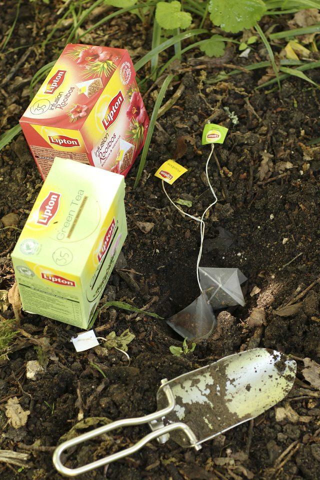 Mẹo làm vườn từ túi trà lọc cực hay