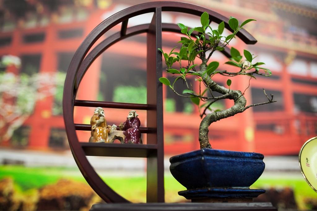 Mách bạn cách trồng bonsai trang trí vườn nổi bật
