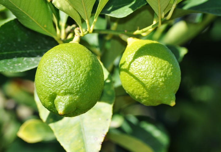 Bí kíp trồng 8 loại cây ăn quả từ hạt cực đơn giản