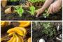 Mẹo làm vườn từ chuối và trứng hỏng cung cấp dinh dưỡng