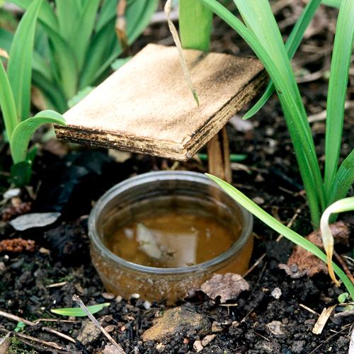 Bí kíp làm thuốc trừ sâu bệnh hại cây trồng