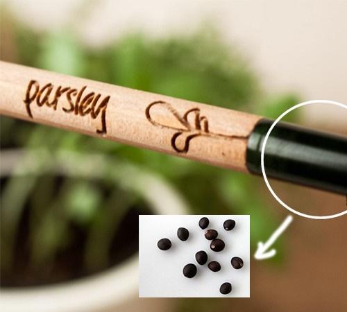 Khám phá mẹo hay trồng cây bằng bút chì cực thông minh