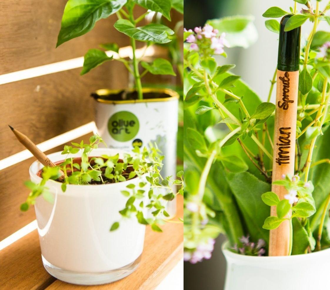 Mẹo trồng cây bằng bút chì thông minh
