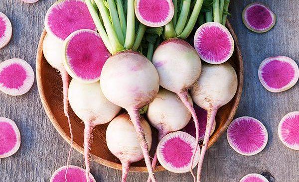 Bí kíp trồng củ cải mini trắng vỏ đỏ lòng